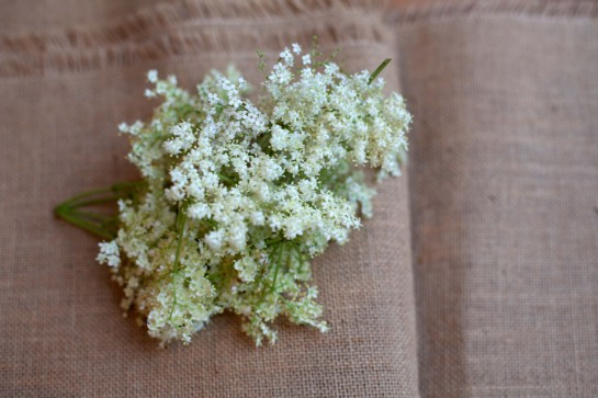 LoveRichCashPoor goes foraging for elderflowers in N16
